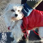 Benjo