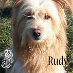 Rudy piccolo