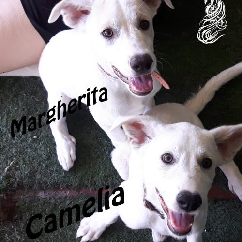 Margherita e Camelia