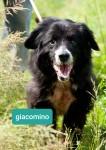 Giacomino