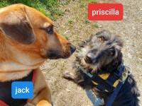 Priscilla e Jack