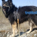 Trottolino