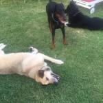 Apollo e la sua nuova famiglia canina