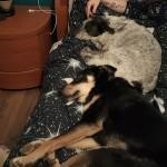 Dolce, coccolone e solare. Il cane perfetto insomma, l'unica cosa che ti mancava era una famiglia tutta TUA. Infatti dopo poco tempo sono arrivati LORO che ti hanno amato sin da subito. Ora non possiamo far altro che augurarti una splendida vita gigante dal cuore buono. La Fenice