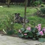 Lunetta e il giardino